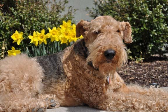 Spring daffodils 2010a