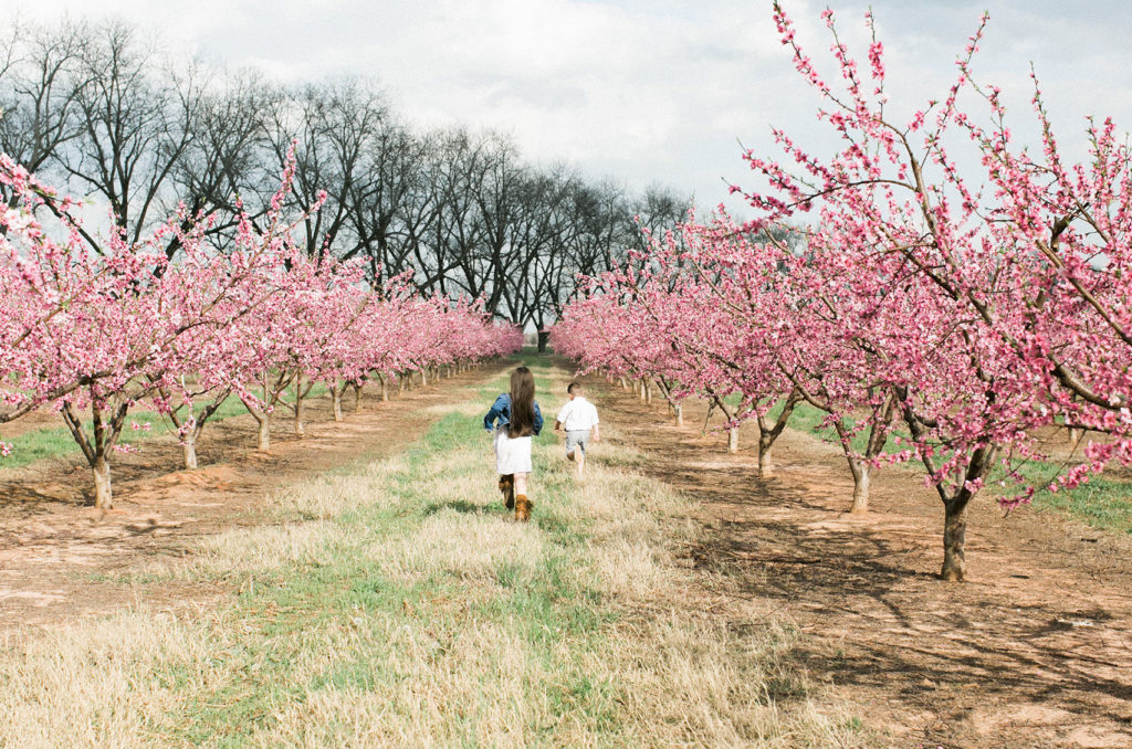 Peach Fields Bloom with Kids - The Peach Pelican