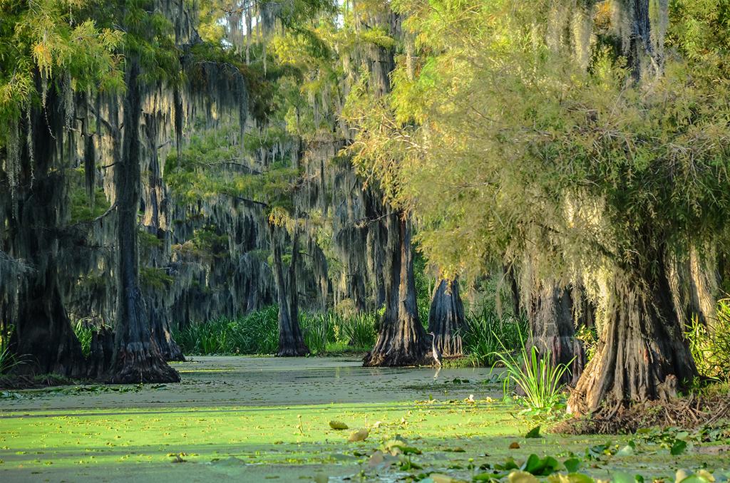 Louisiana bayou - The Peach Pelican