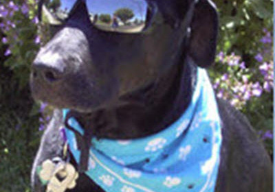 Remembering Stormy 5 Years Later – He Overcame Abuse to Become  Superstar
