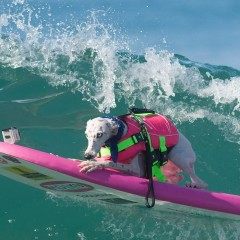 SURF DOGS – Surf City Competition Huntington Beach CA