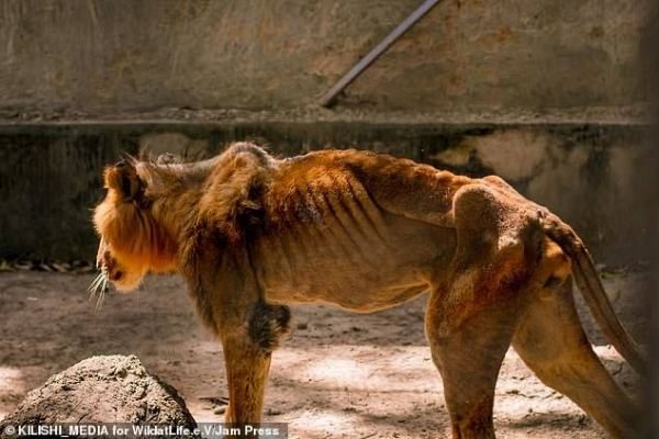 wildlife-sinzuuliveblog