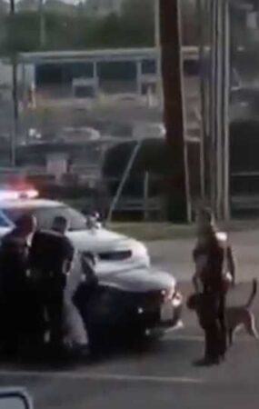 attacked by police dog
