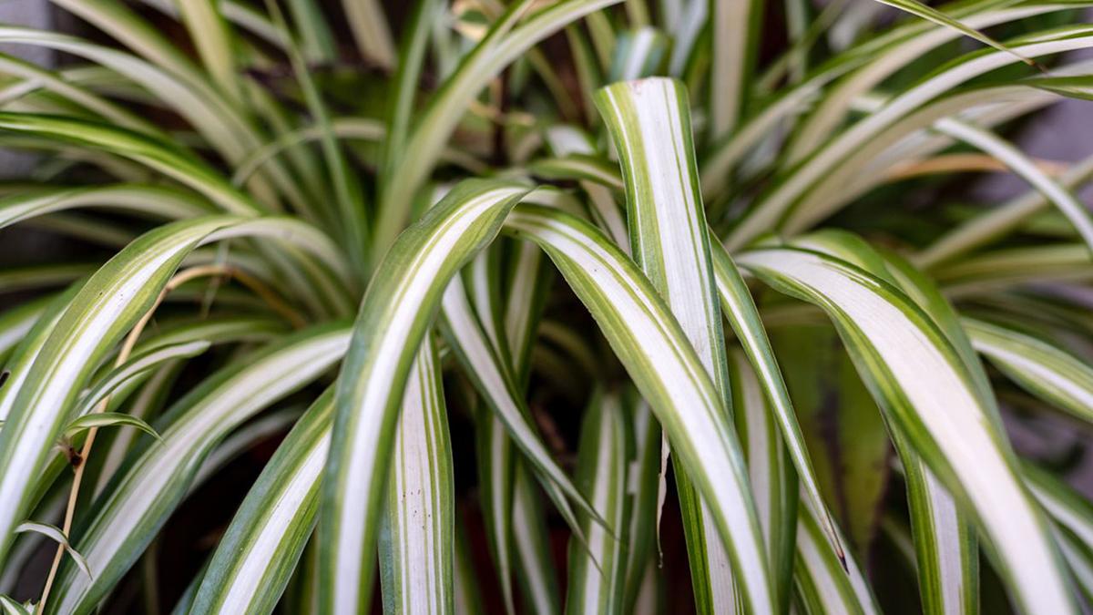 Las mejores plantas para el interior