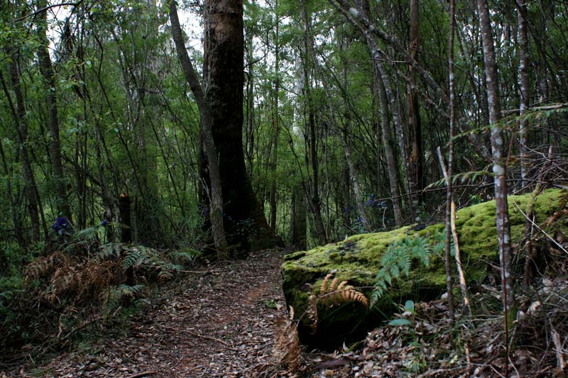 Forest-section