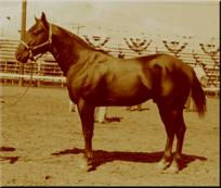 Click for 365 Famous AQHA & TB Horses with their Foundation Quarter Horse Percentage per NFQHA research criteria