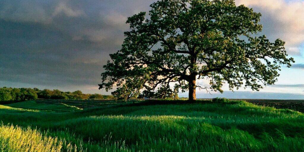 That-Tree
