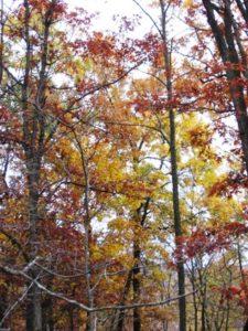 fall trees colors