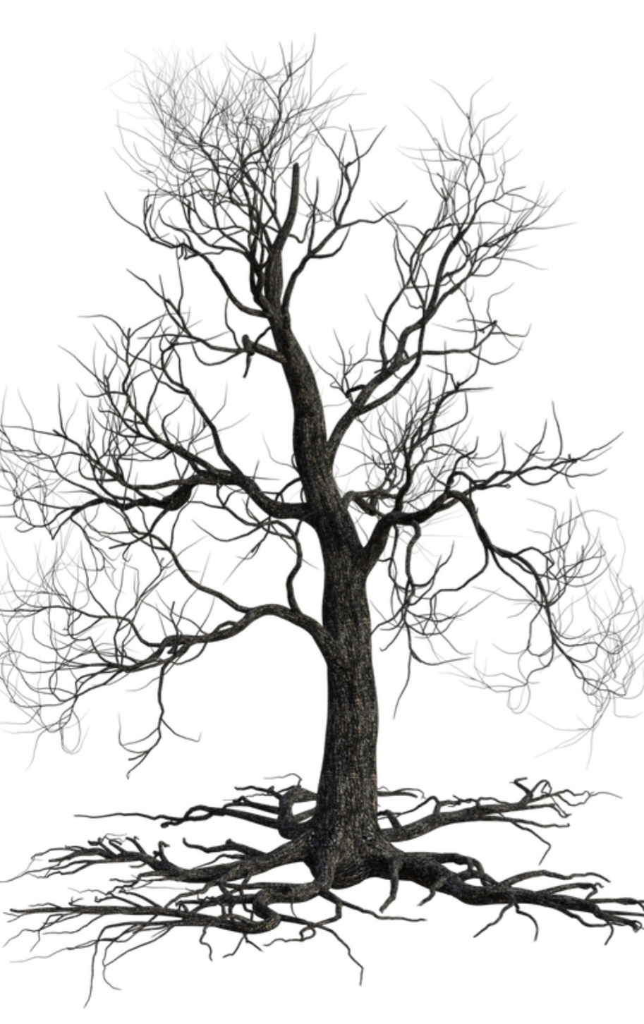 We Are All Like a Tree.