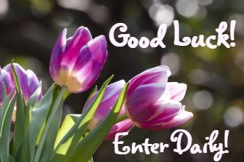 good-luck-tulips