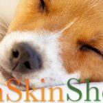 PeachSkinSheets Ultra Soft Moisture Wicking Sheets for a Dreamy Night's Sleep