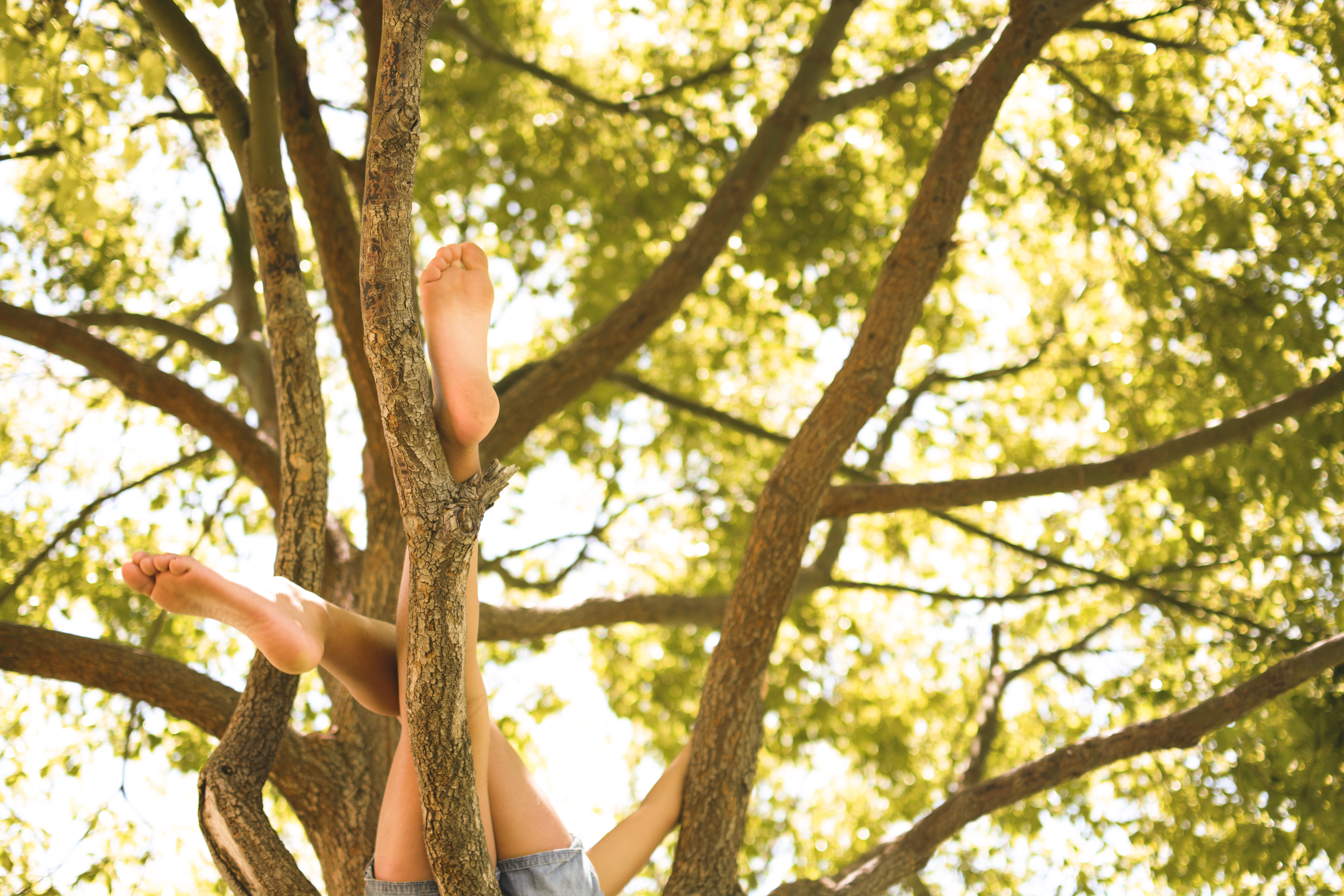 Kid in a tree legs documentary family photography captured grace by erin