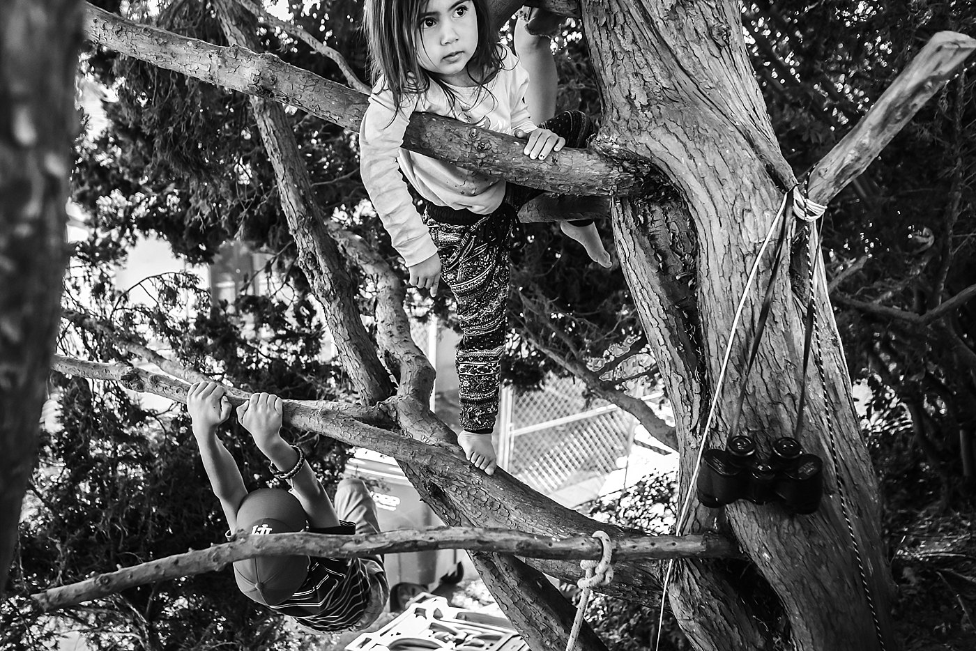 toddler climbing tree redlands family photographer