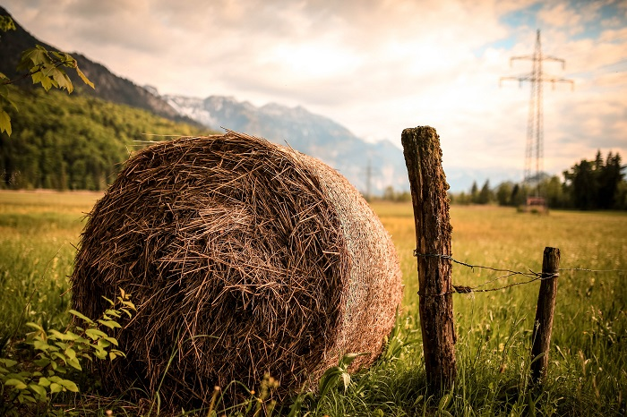 Hay 101: Types, Price, and How To Store It