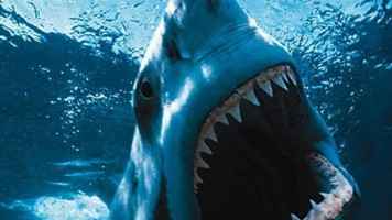 How To| Survive a Shark Attack