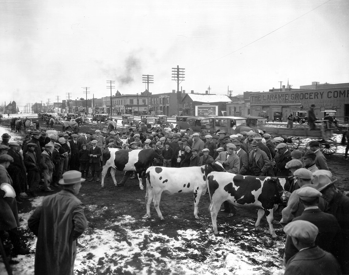 1330-cows-in-town-dura