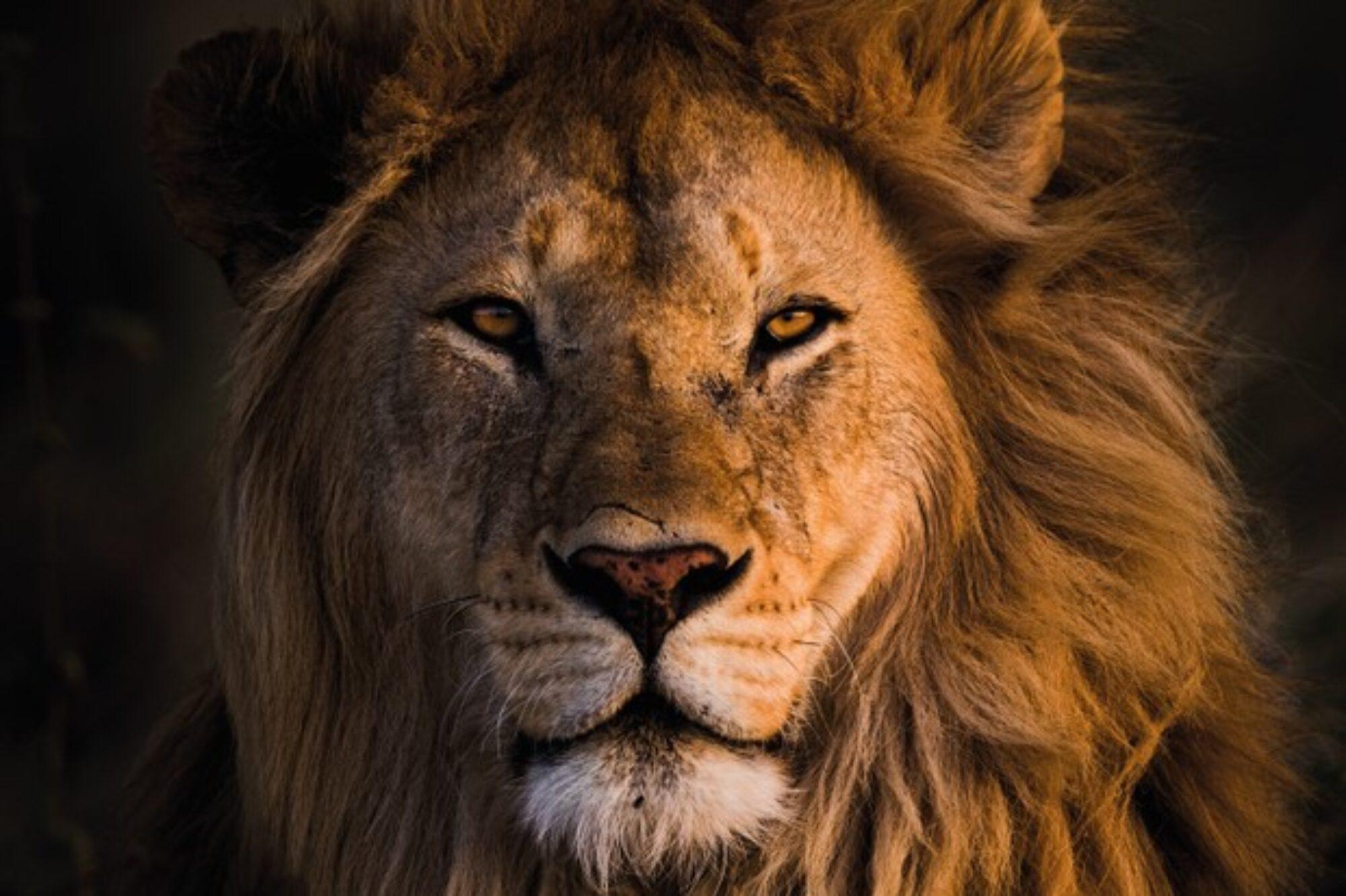 Lacey Sunrise Lions