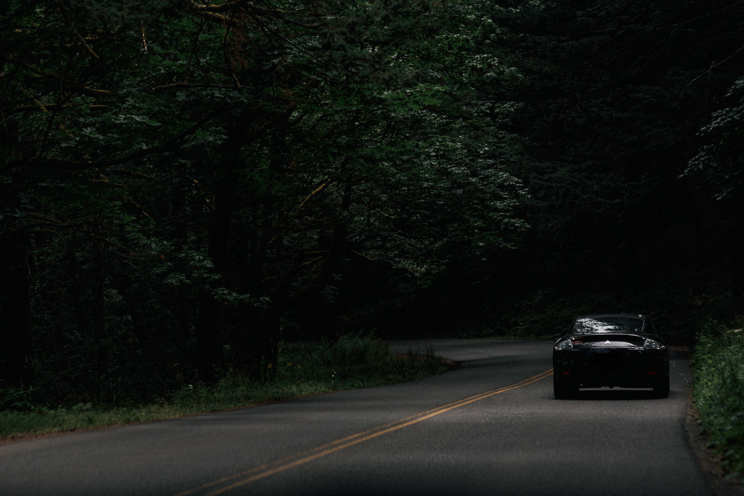 Image of car on the road in the trees in Portland