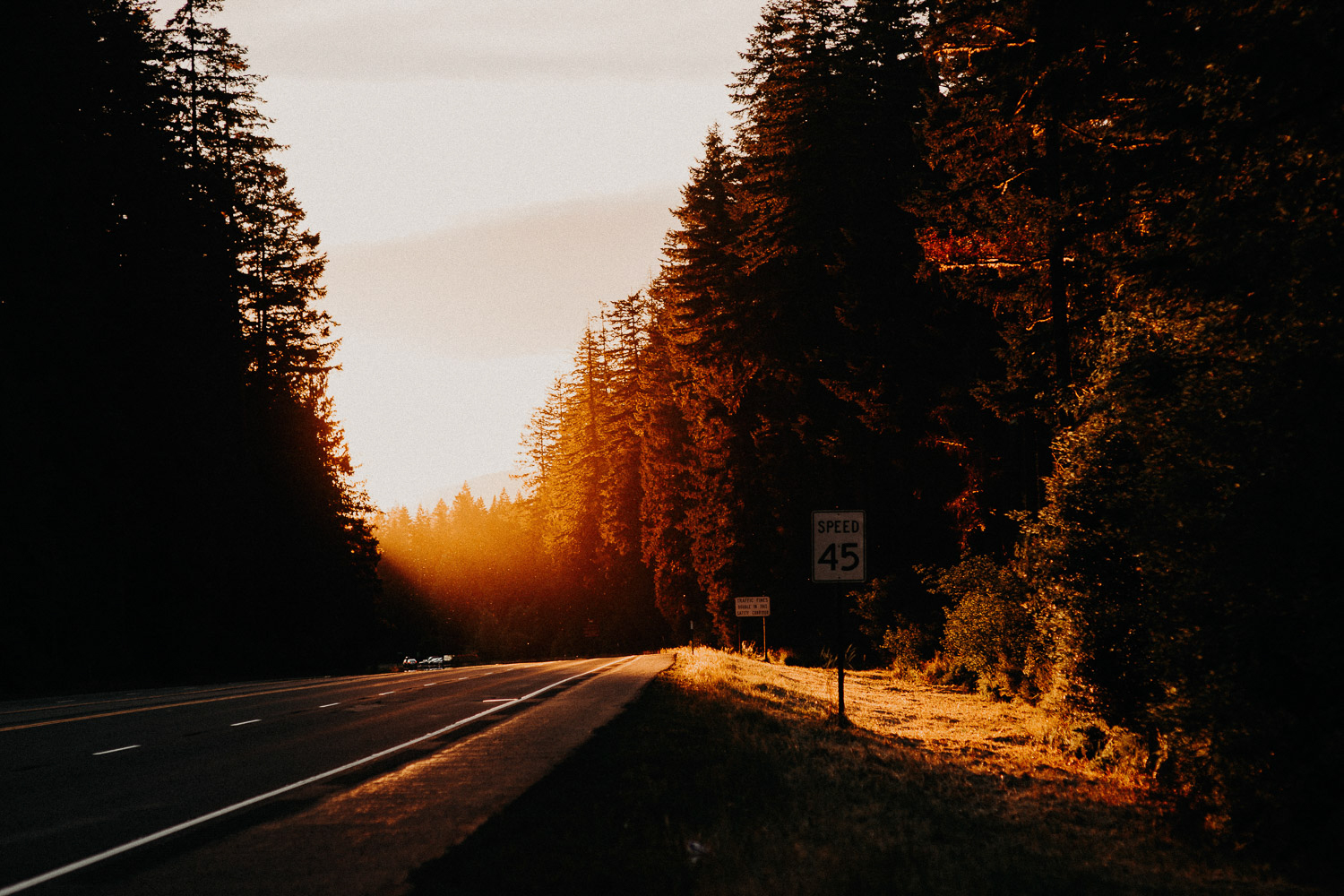 Image of golden sunset on green pine trees in Portland