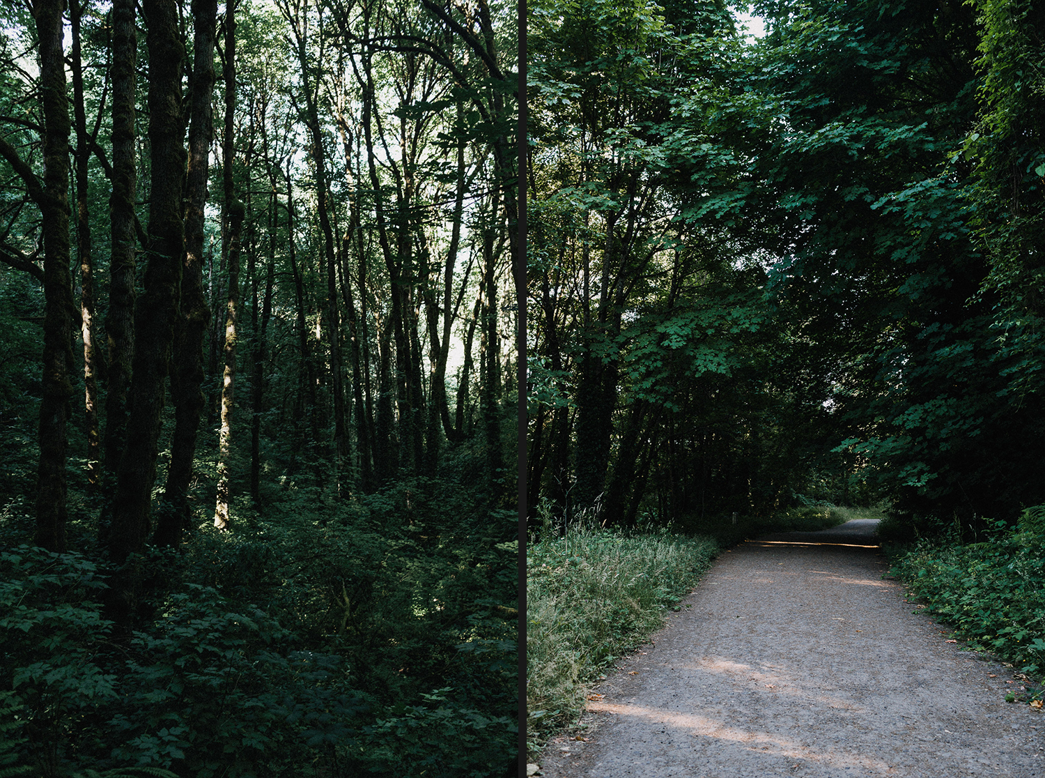 Image of green nature in Portland