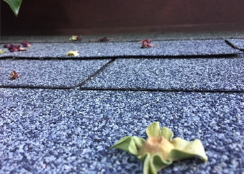 Shingle Roofing with Debris for Spring Roofing Maintenance