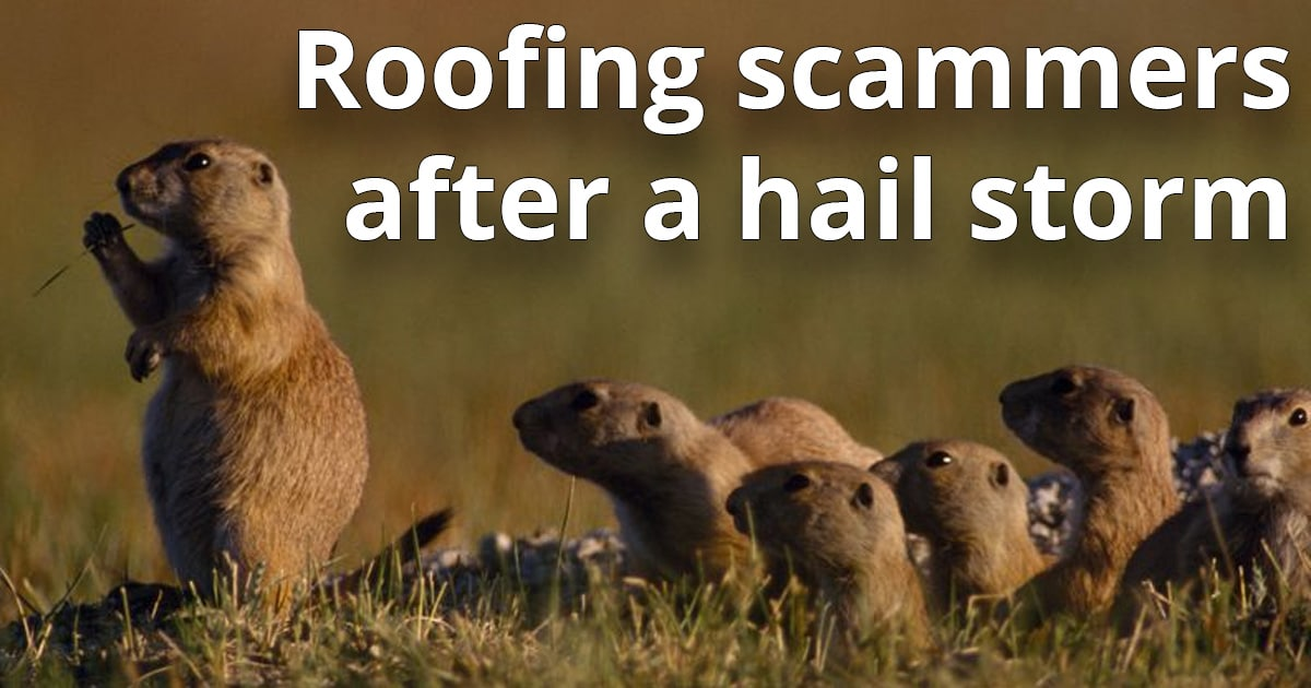 Funny image of prairie dogs compared to roofing scammers after a hail storm