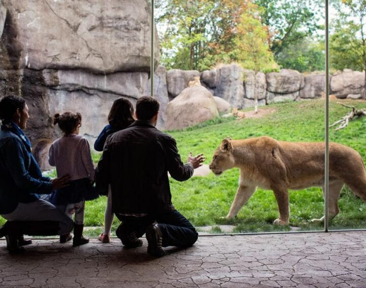 Great Animal Encounters in Oregon For The Kids