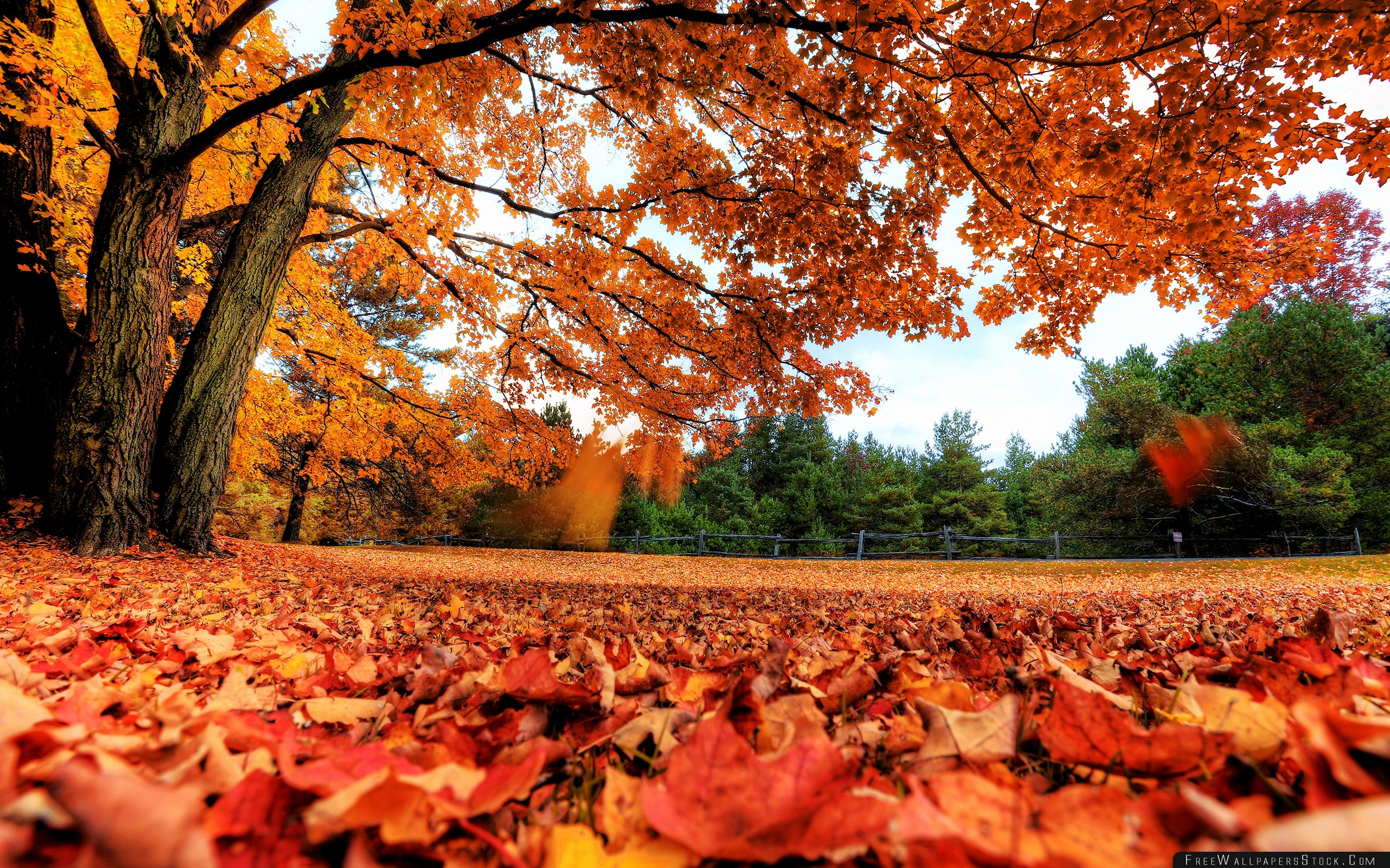 Download Free Wallpaper Autumn Leaves Nature