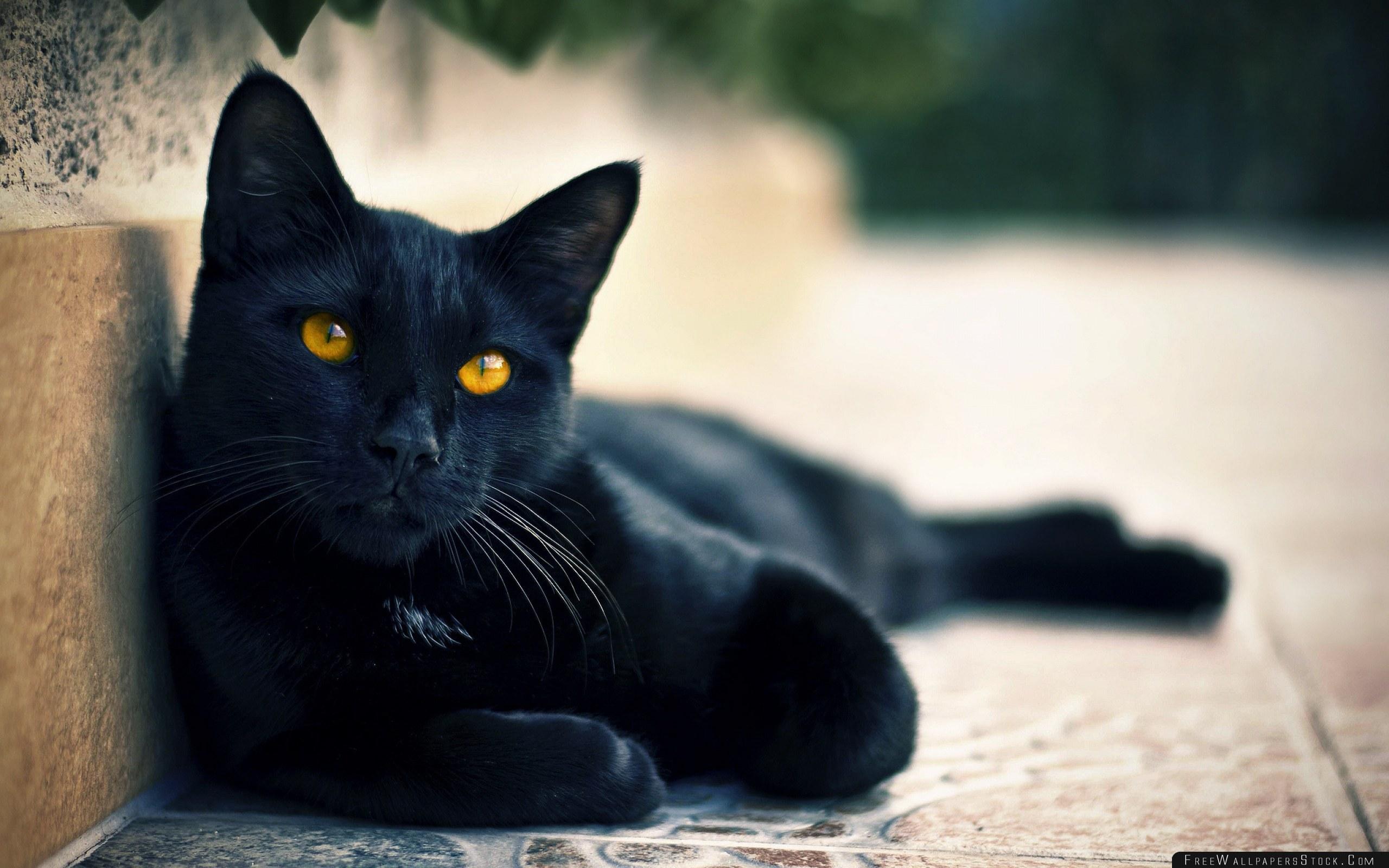 Download Free Wallpaper Black Cat Lying Face Eyes