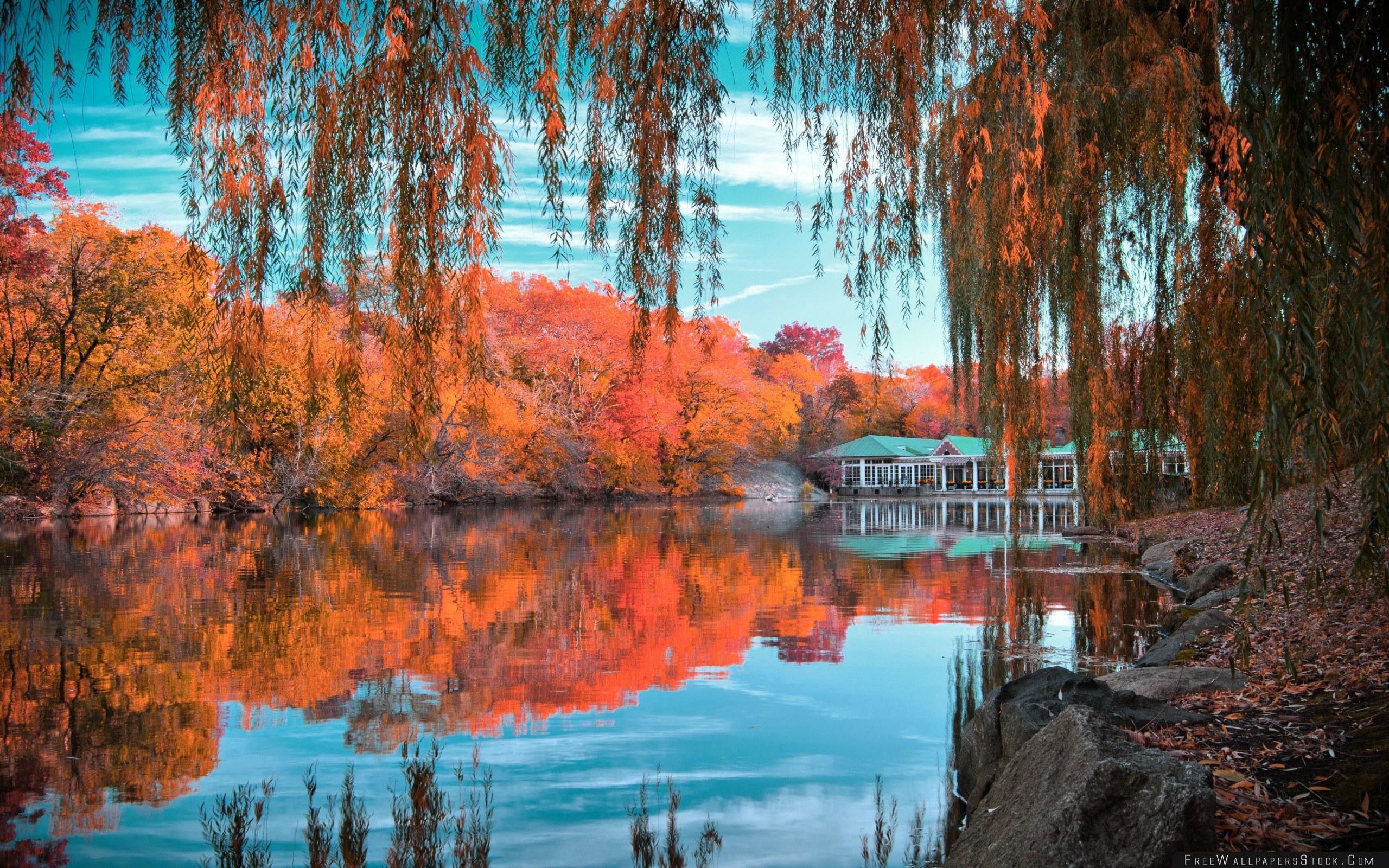 Download Free Wallpaper Central Park New York Autumn Beautiful Landscape