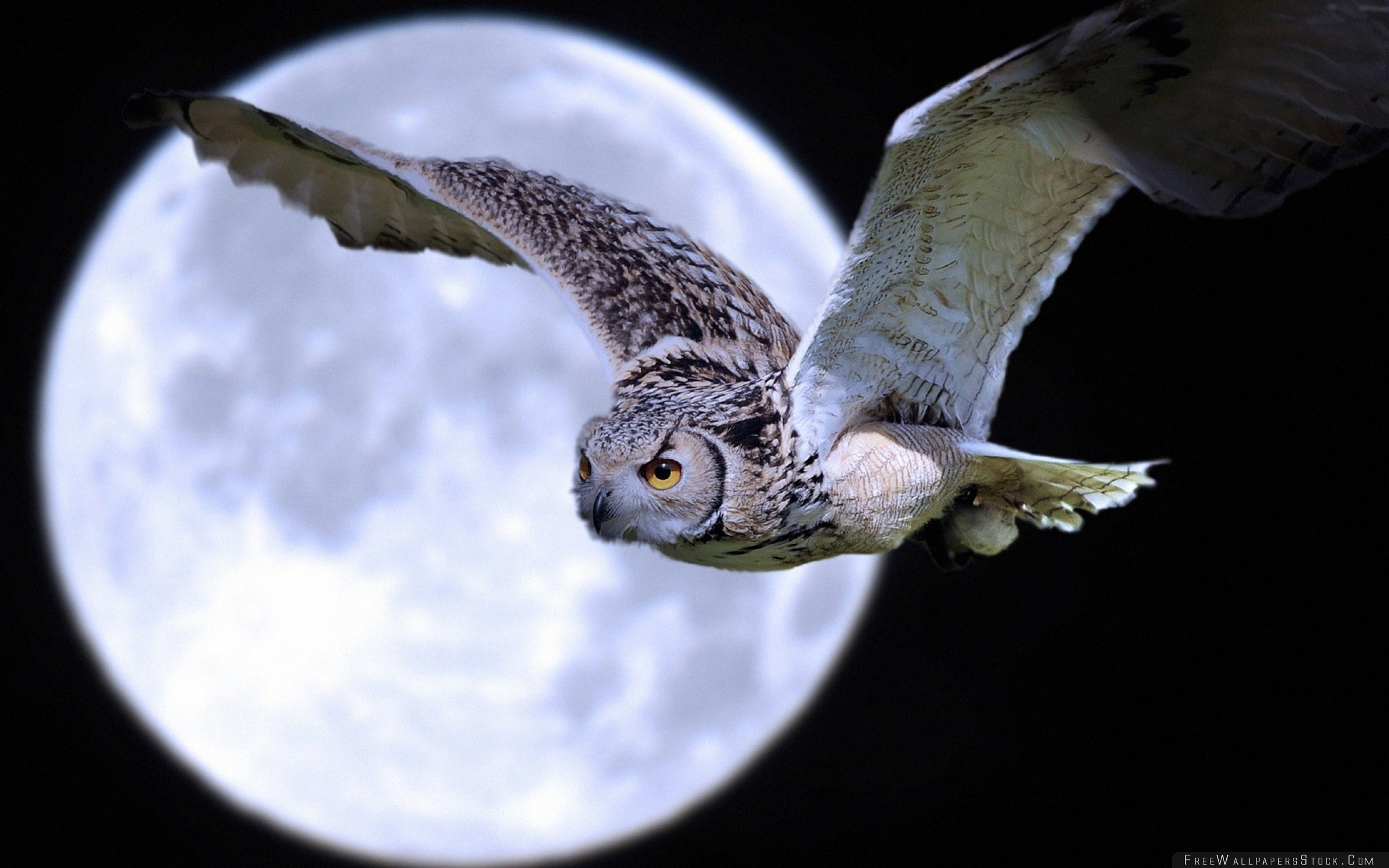 Download Free Wallpaper Owl Bird Predator Moon Flight