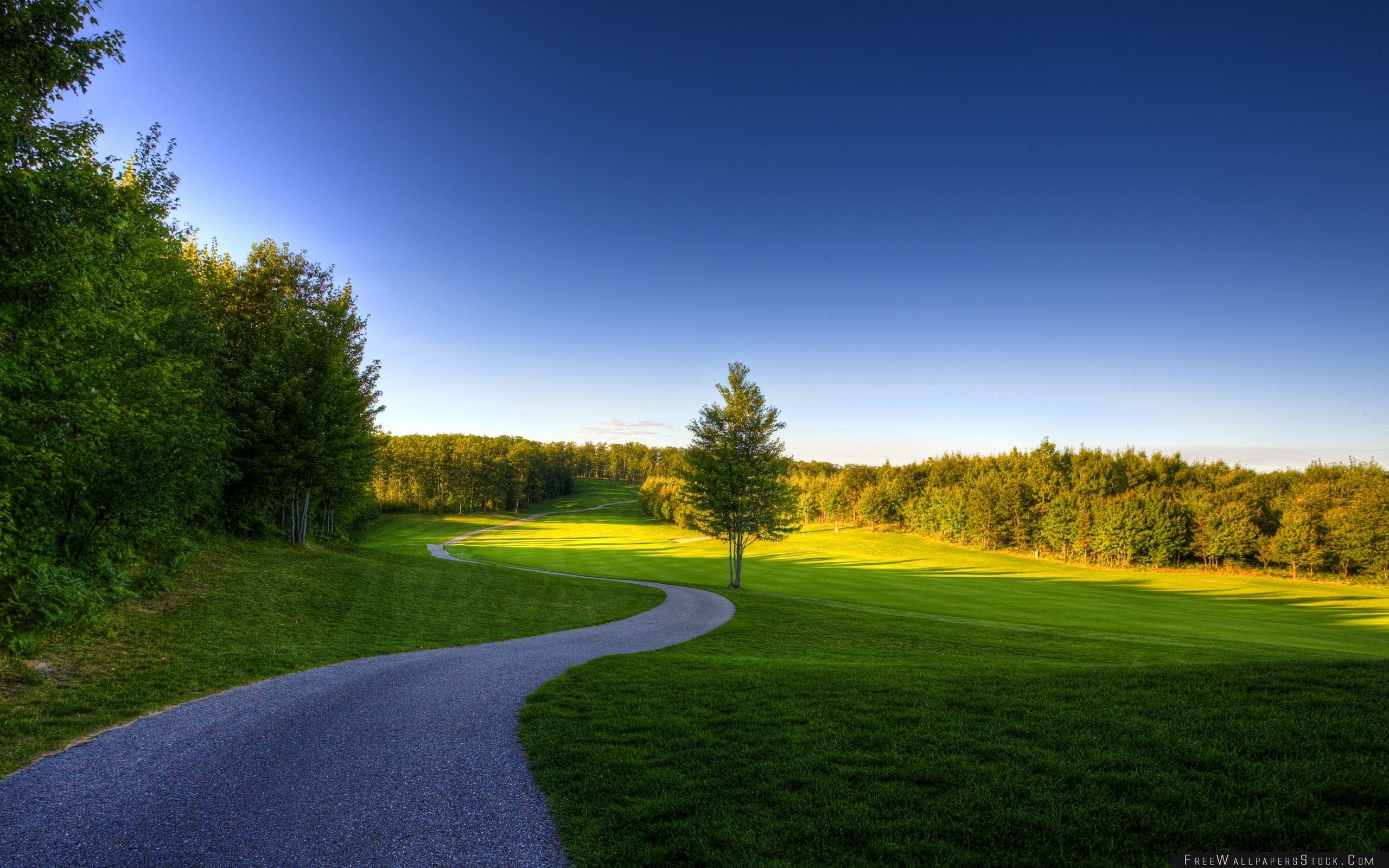 Download Free Wallpaper Path Wood Tree Grass Shadow Greens Summer Reserve Open Spaces Landscape