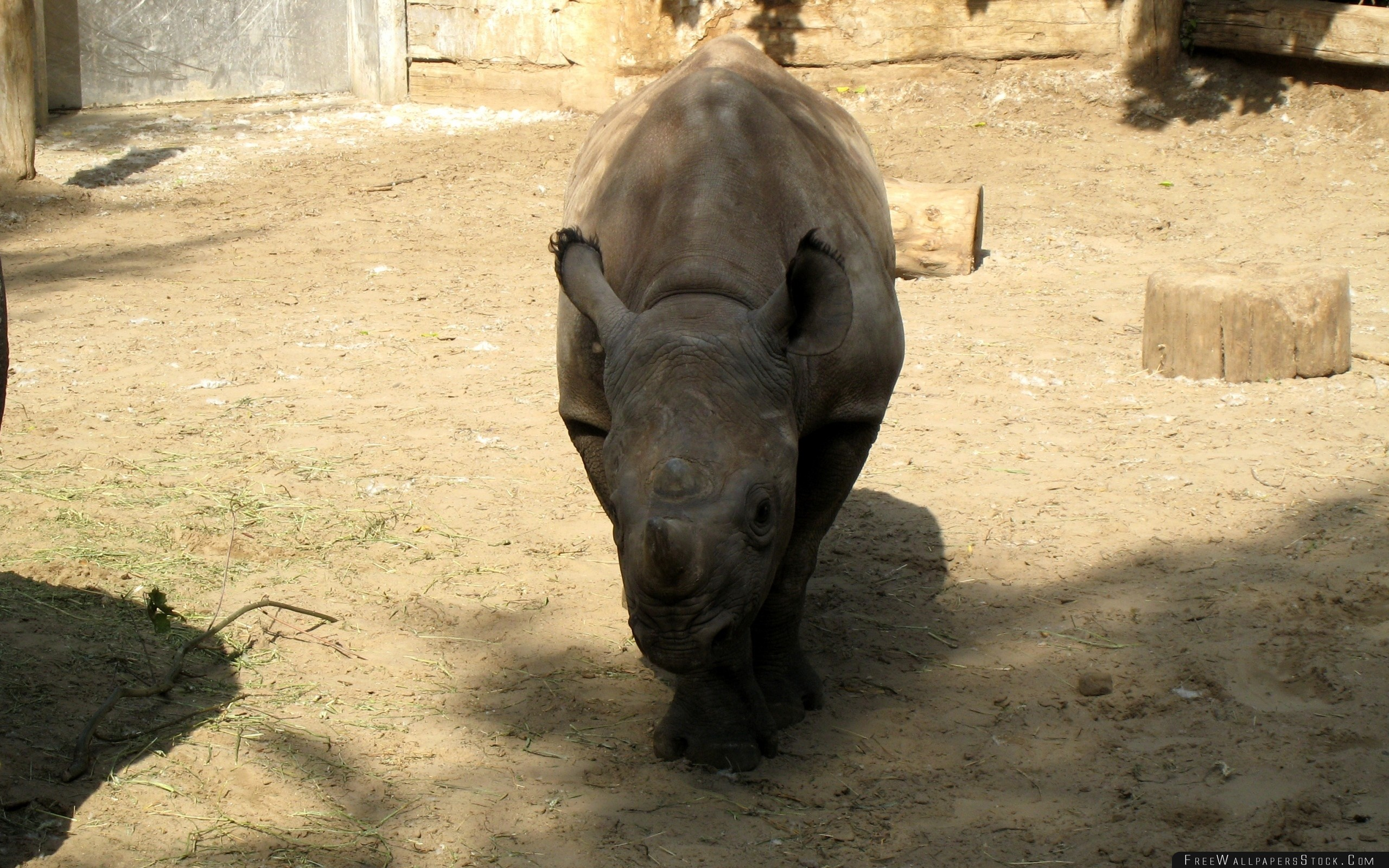 Download Free Wallpaper Reserve Rhino Shadow