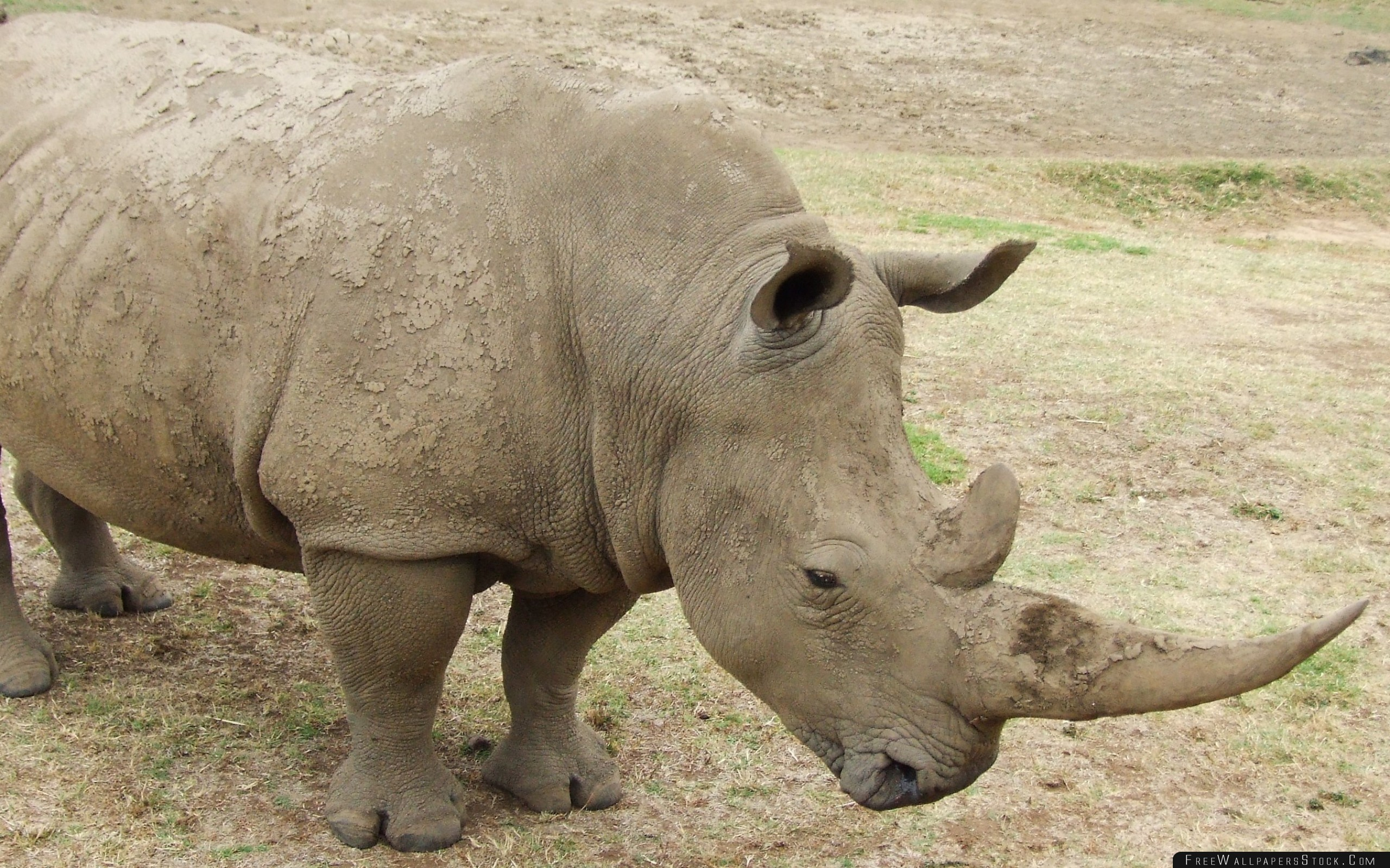 Download Free Wallpaper Rhino Dirt Grass