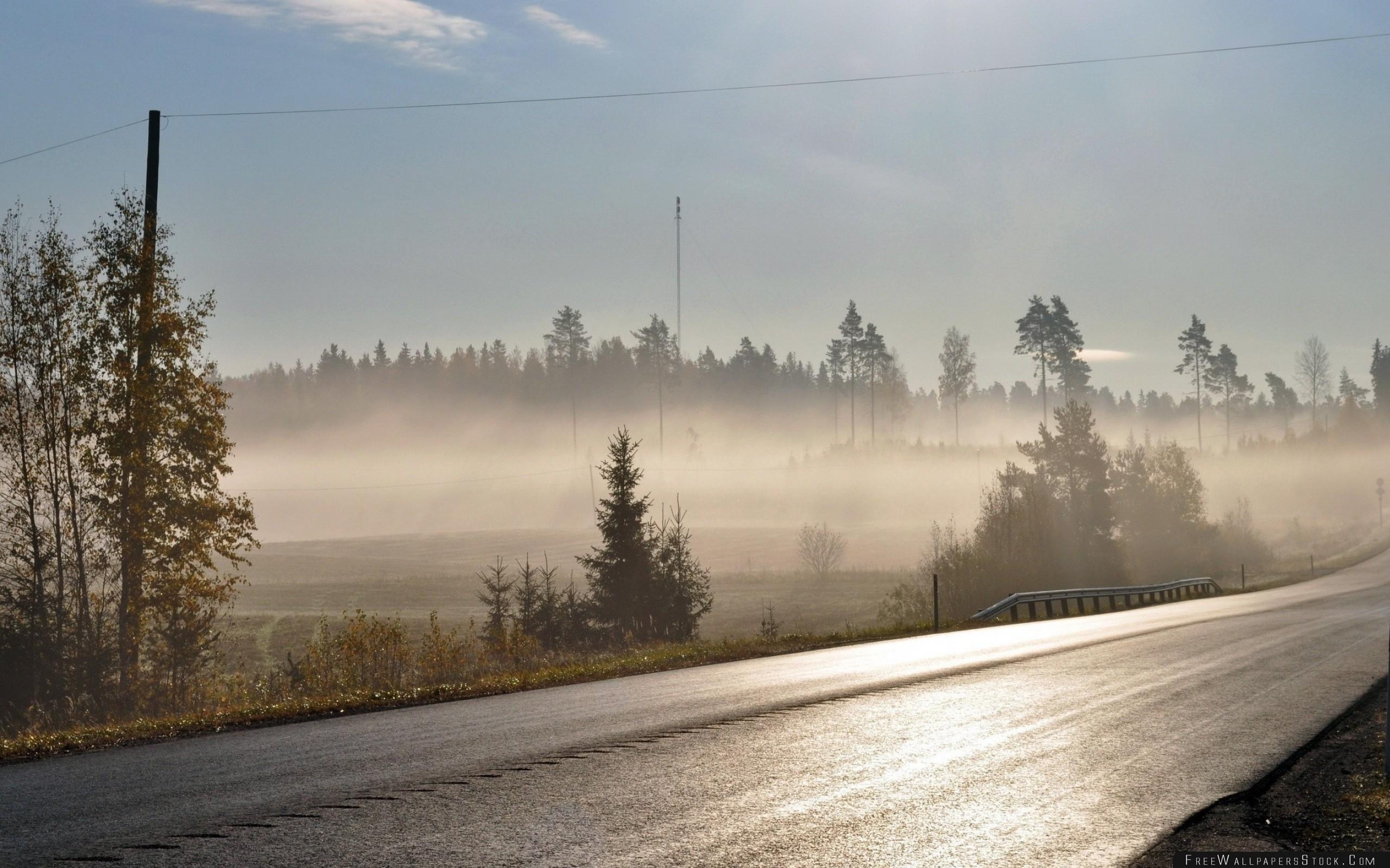 Download Free Wallpaper Road Asphalt Fog Morning Freshness Shine Trees Wires