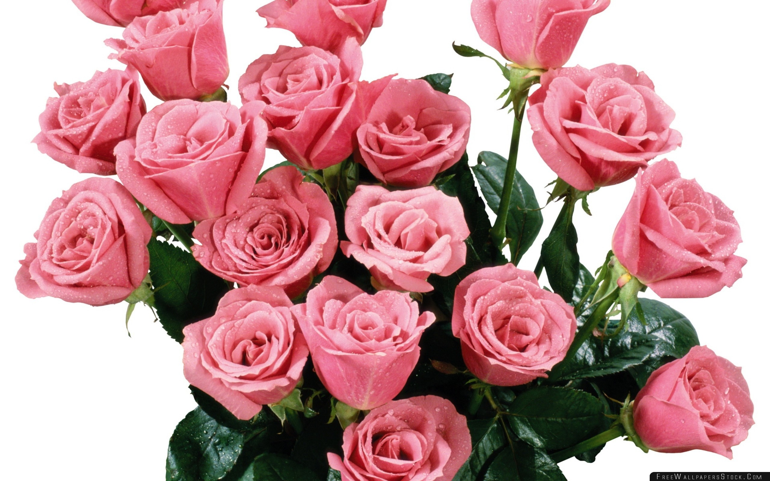 Download Free Wallpaper Roses Bouquet Pink Drop Freshness