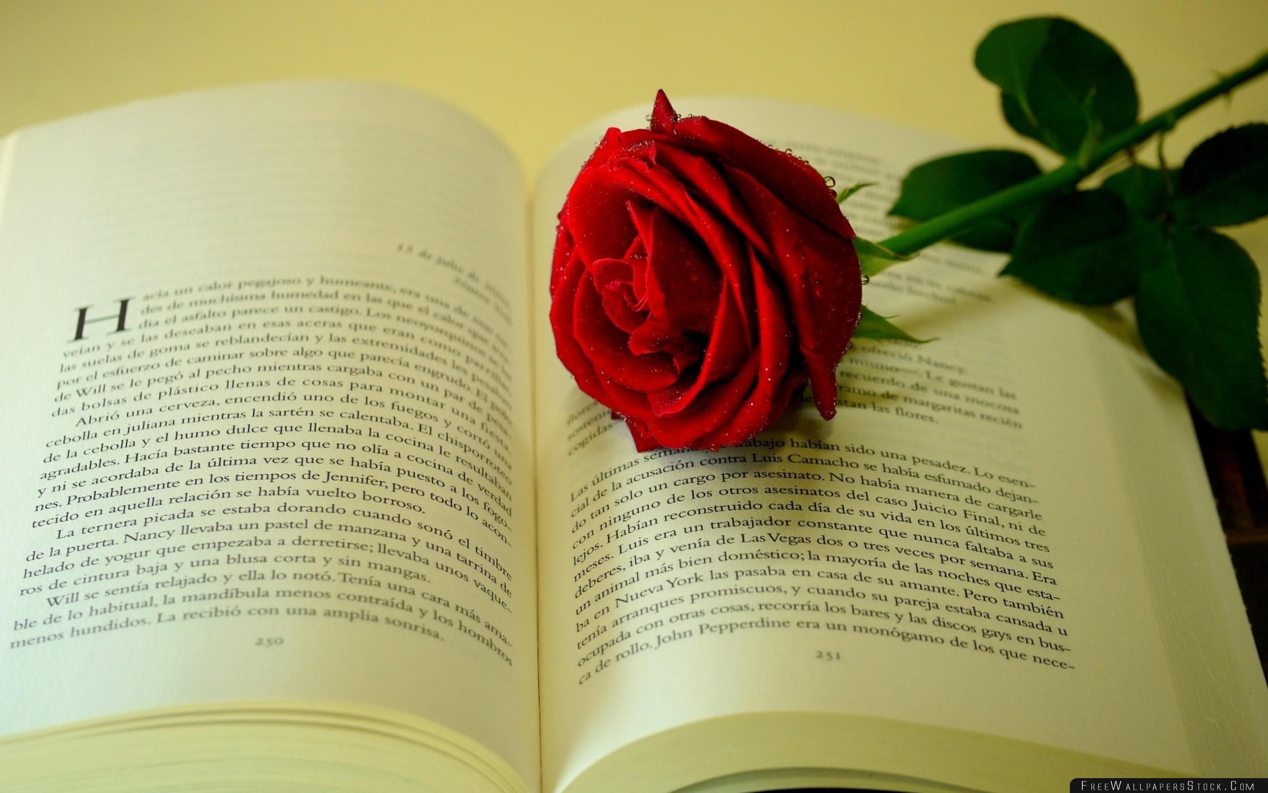 Download Free Wallpaper Rose Flower Drop Freshness Book Text