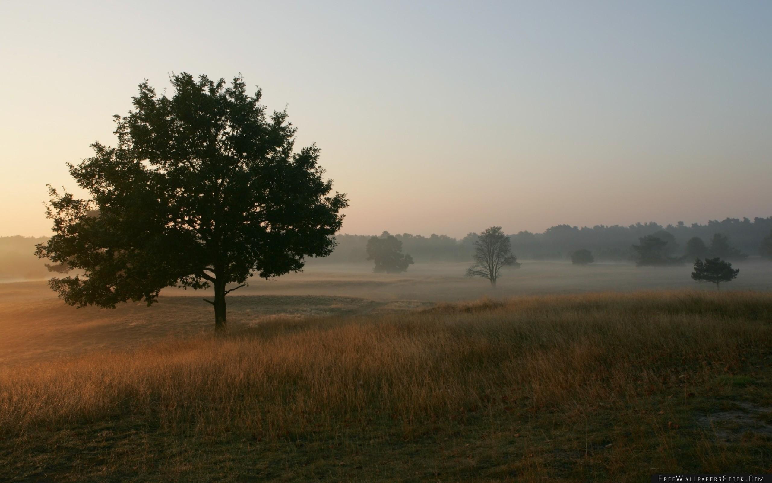 Download Free Wallpaper Trees Field Fog Grass Morning Freshness