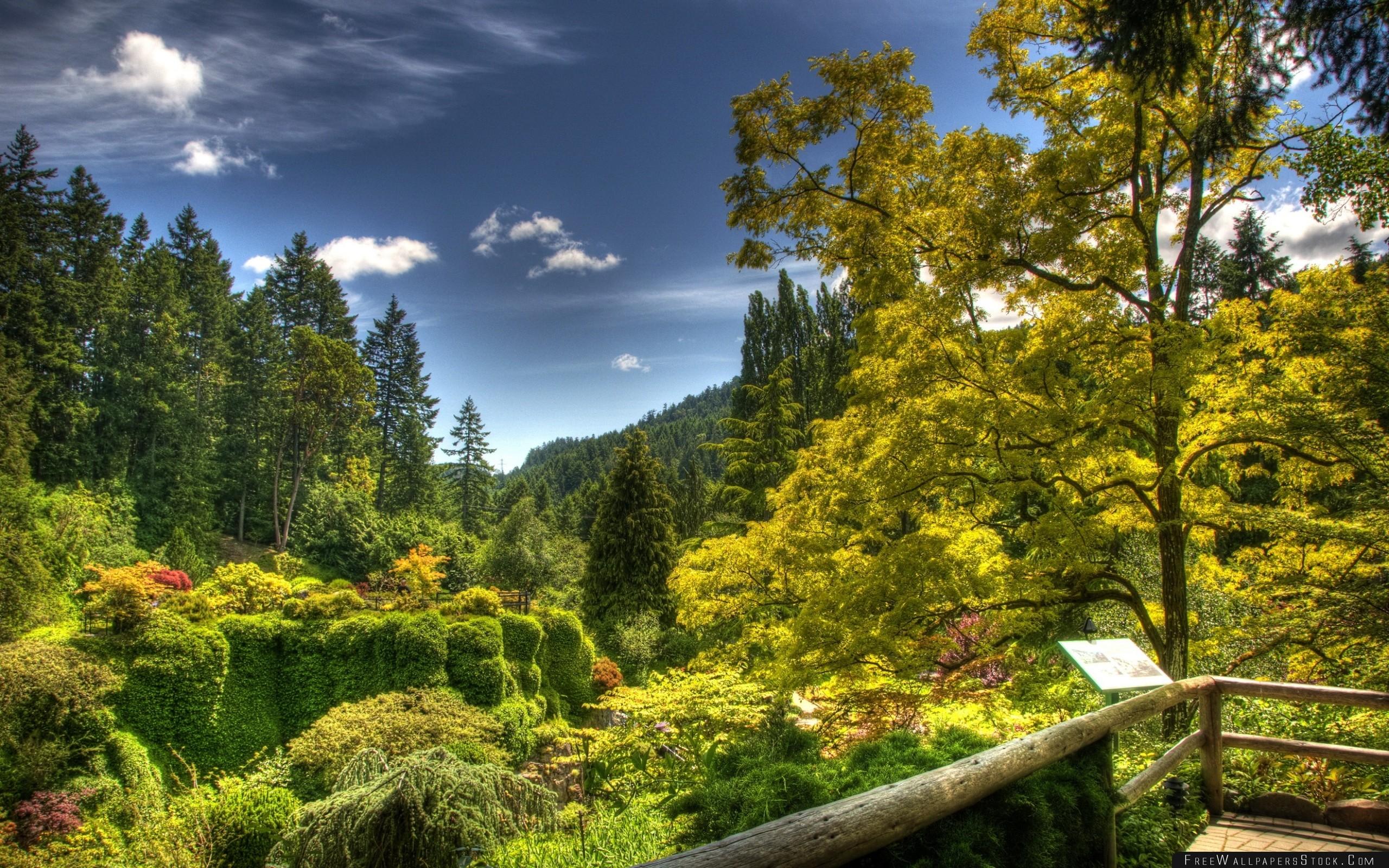 Download Free Wallpaper Tree Nursery Trees Platform Plate Brightly