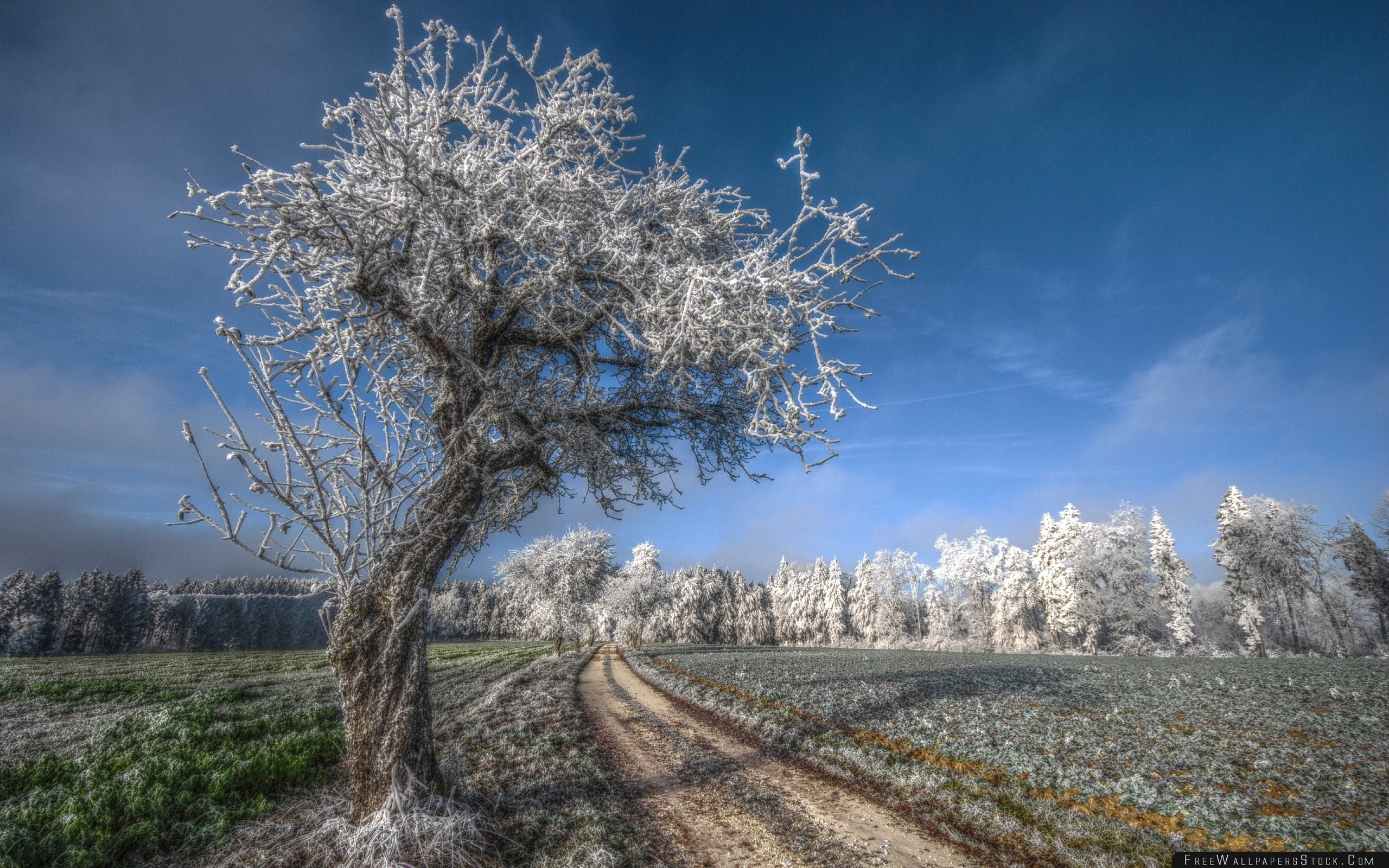 Download Free Wallpaper Tree Road Hoarfrost Gray Hair Cold Frost November Field Grass Sky Blue Freshness