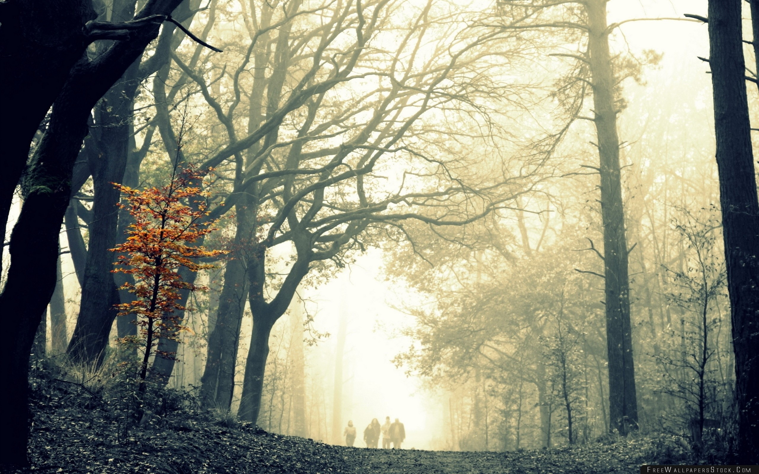 Download Free Wallpaper Wood Fog Tree Leaves Yellow Autumn Terribly Gloomy Difference