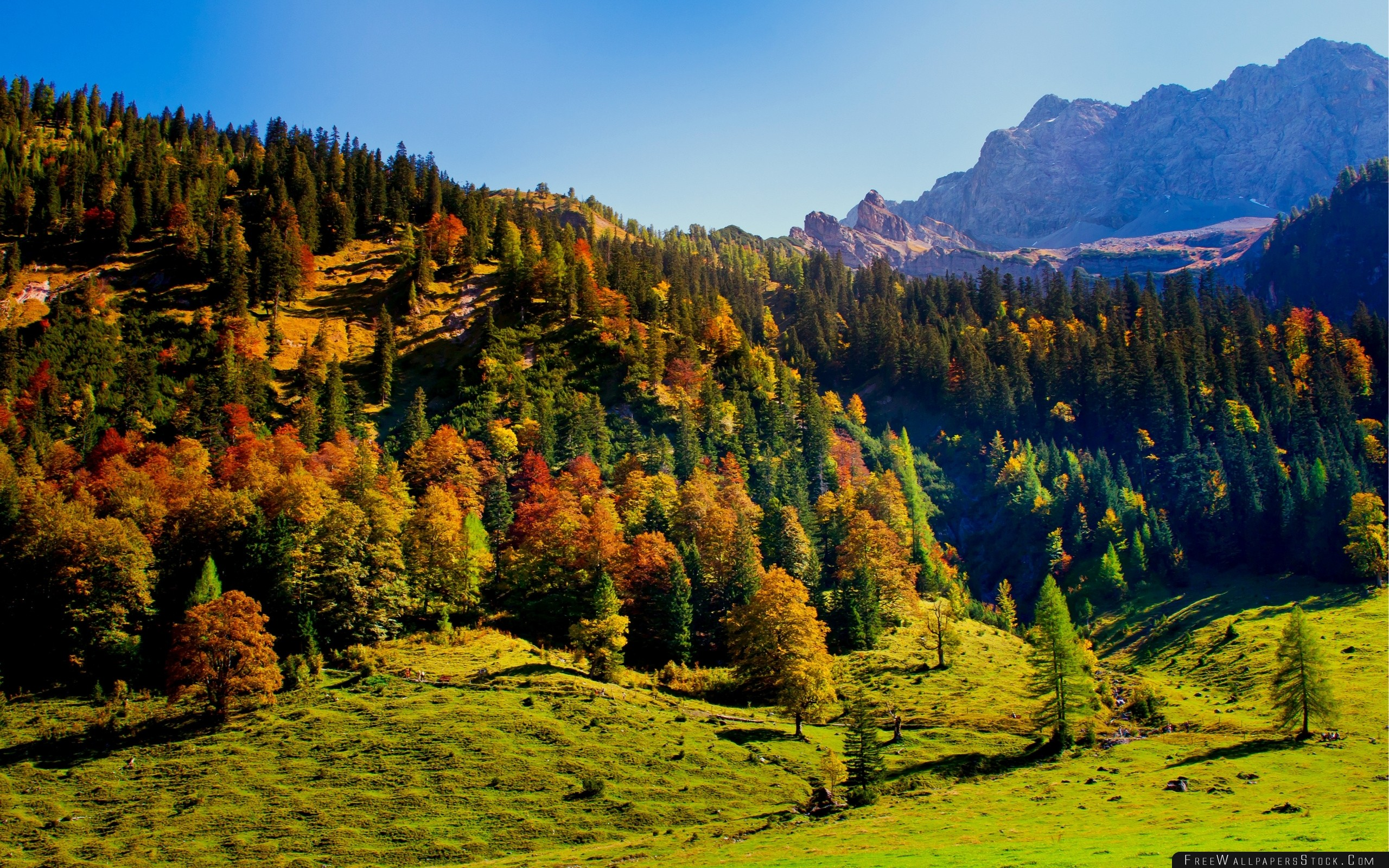 Download Free Wallpaper Wood Green Mountains Hills Relief Landscape Shadows Freshness Air