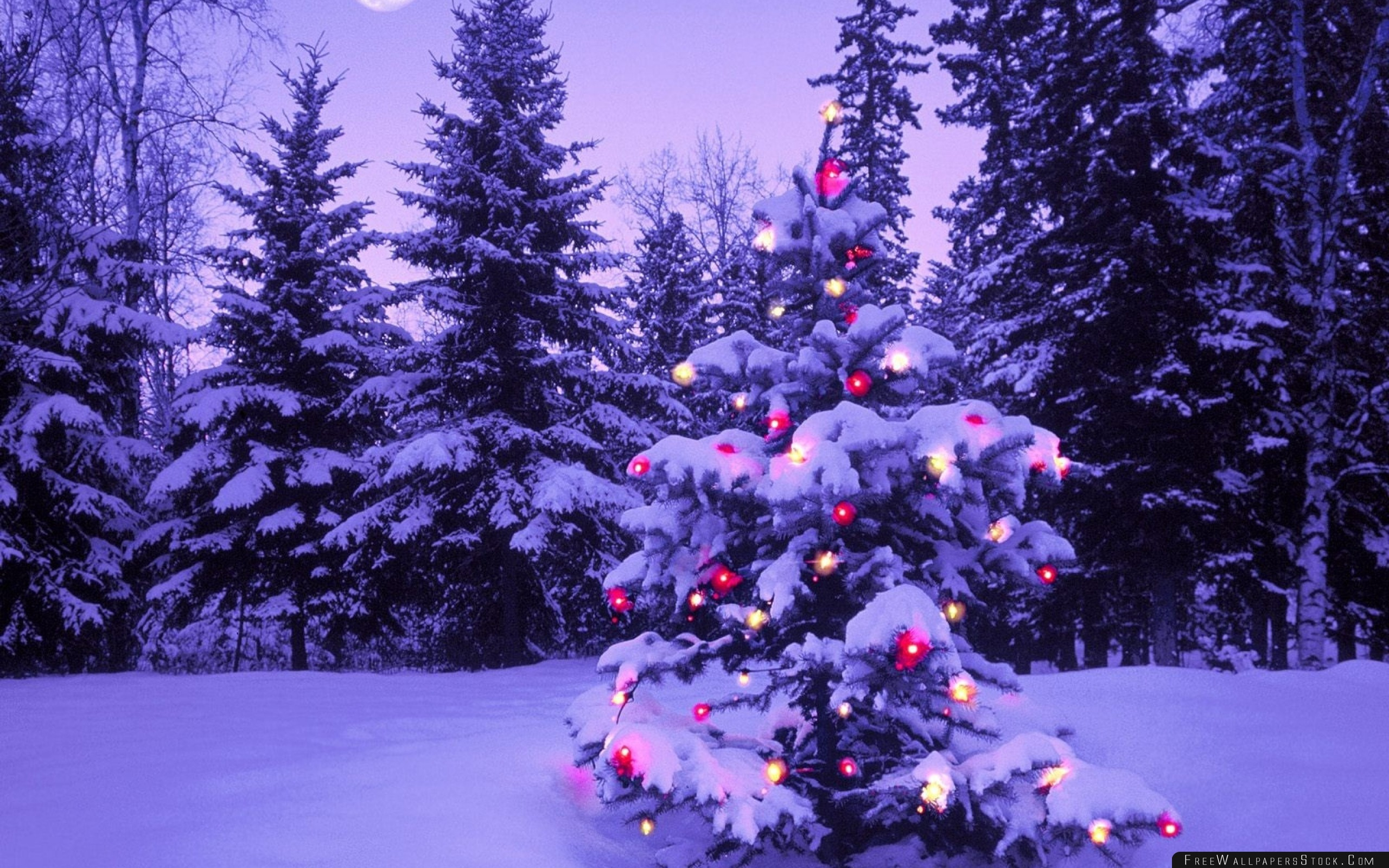 Download Free Wallpaper Wood New Year Christmas Fur Tree Fires Garland Snow Winter Sky Moon Evening