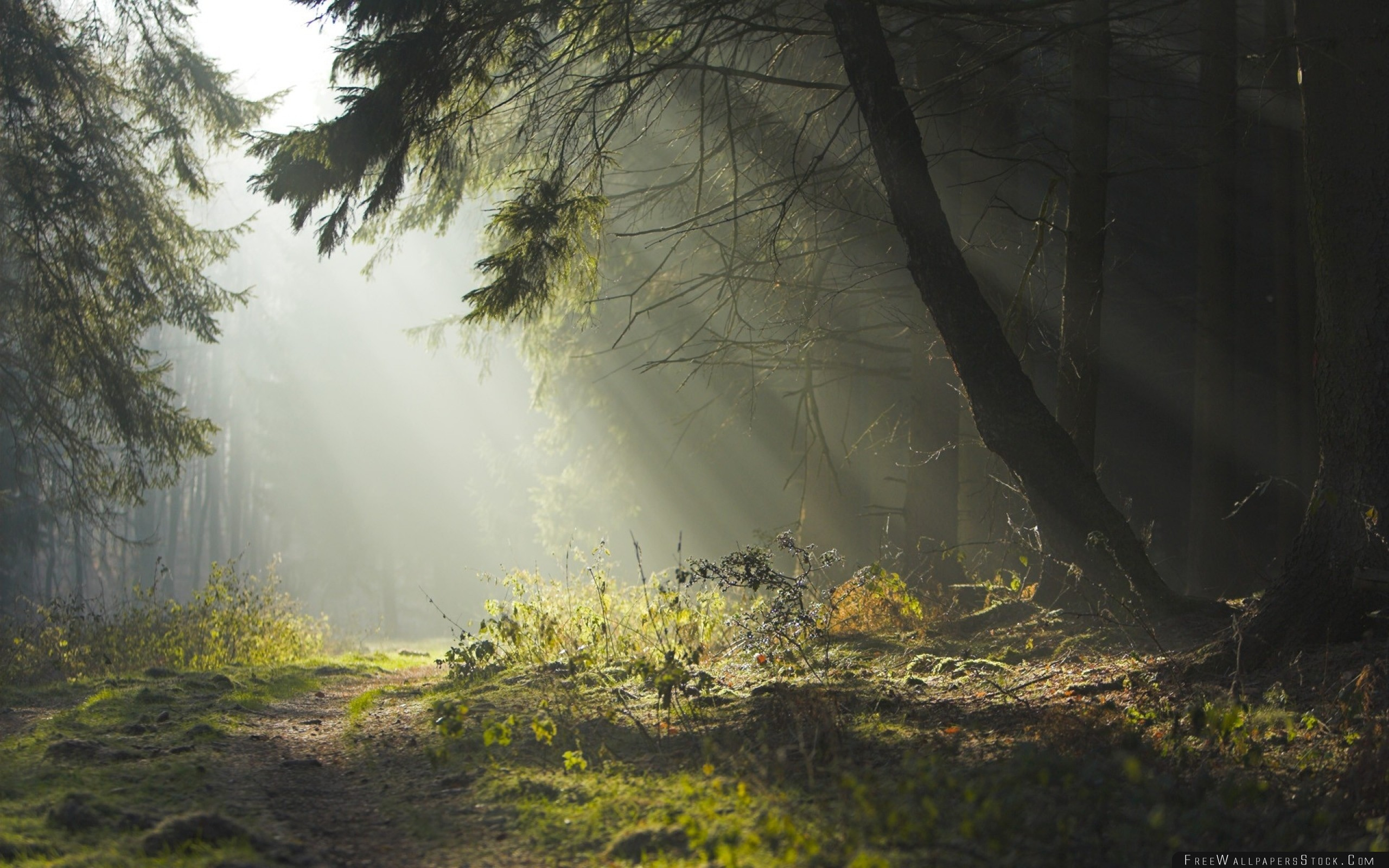Download Free Wallpaper Wood Trees Earth Grass Sun Rays Freshness Morning