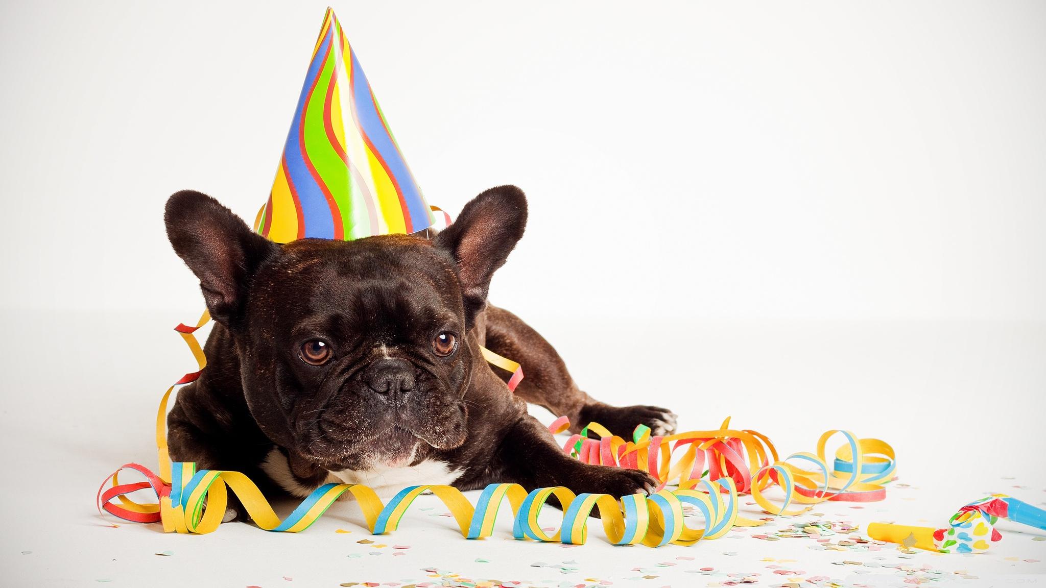 Download Free WallpaperHappy Birthday Dog