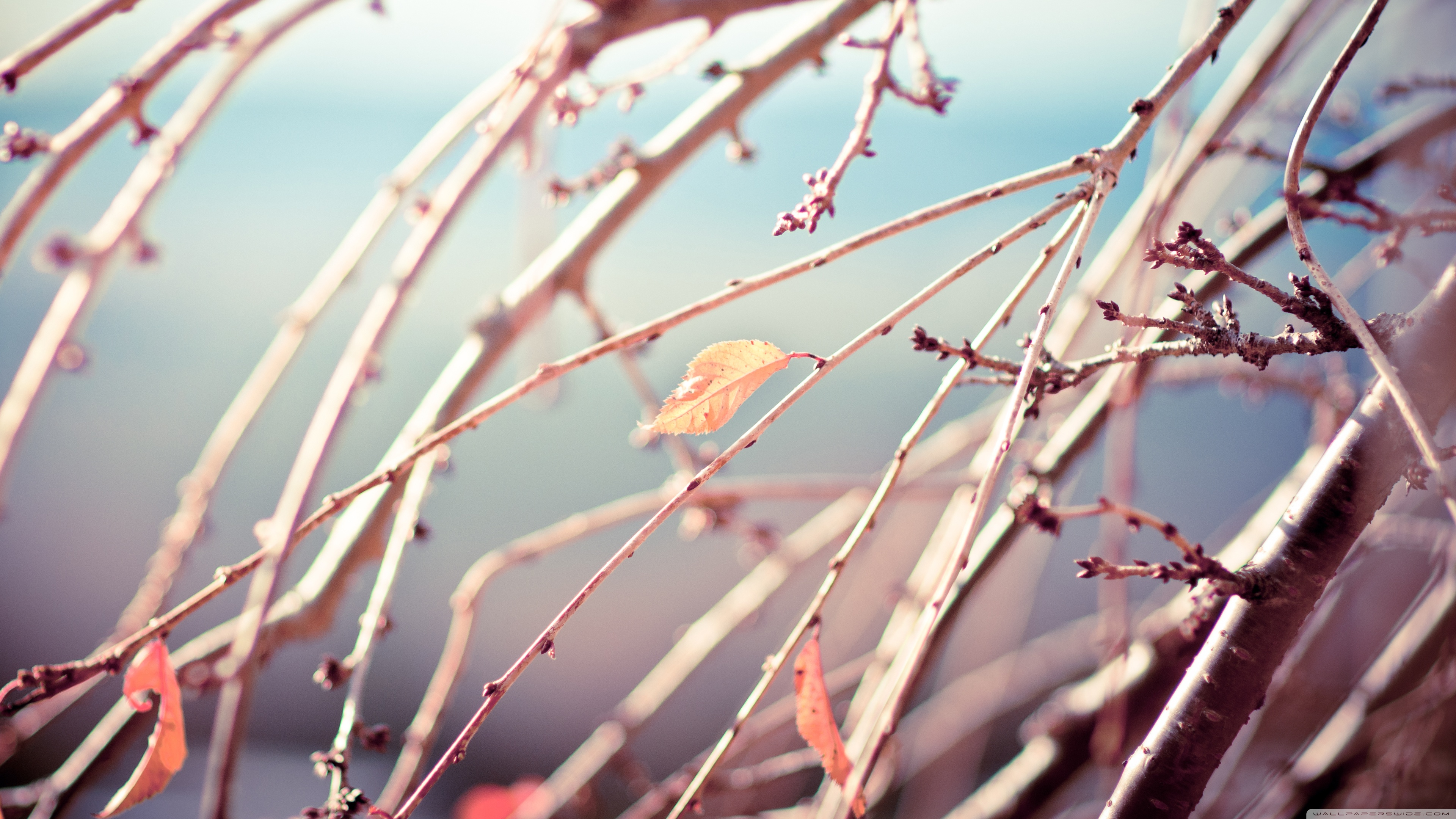 Download Free WallpaperNot Another Winter