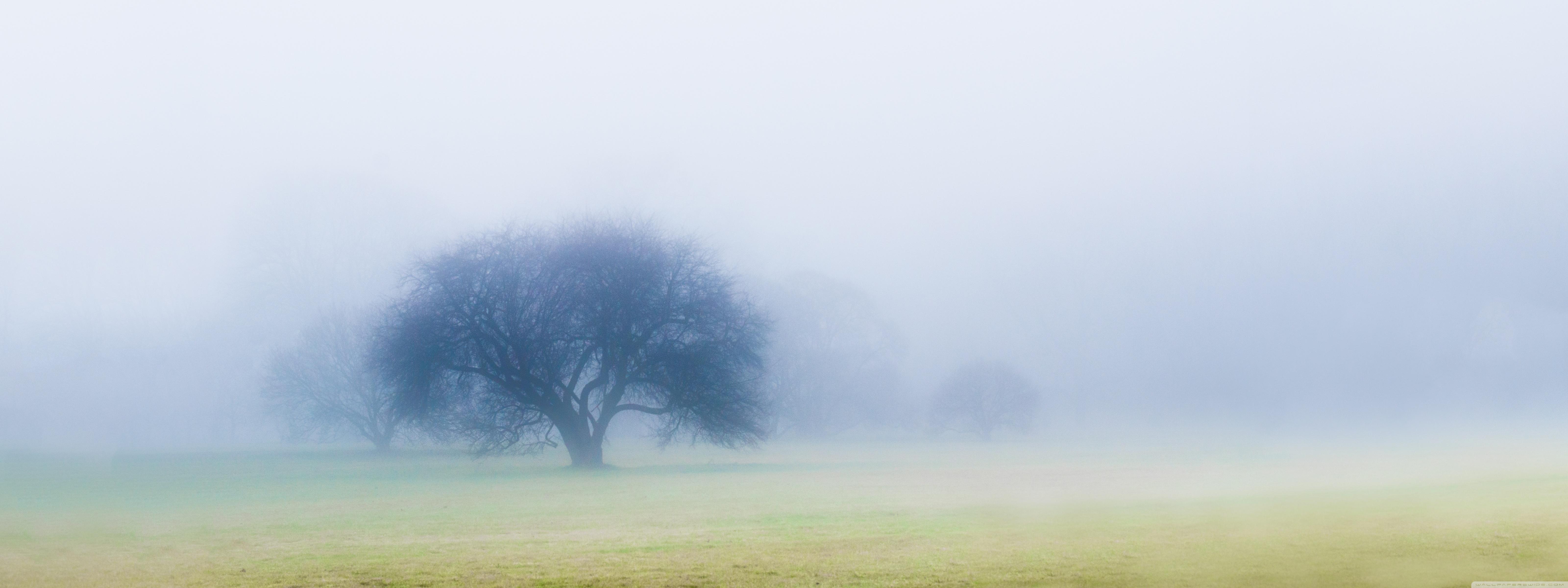 Download Free WallpaperNovember Fog