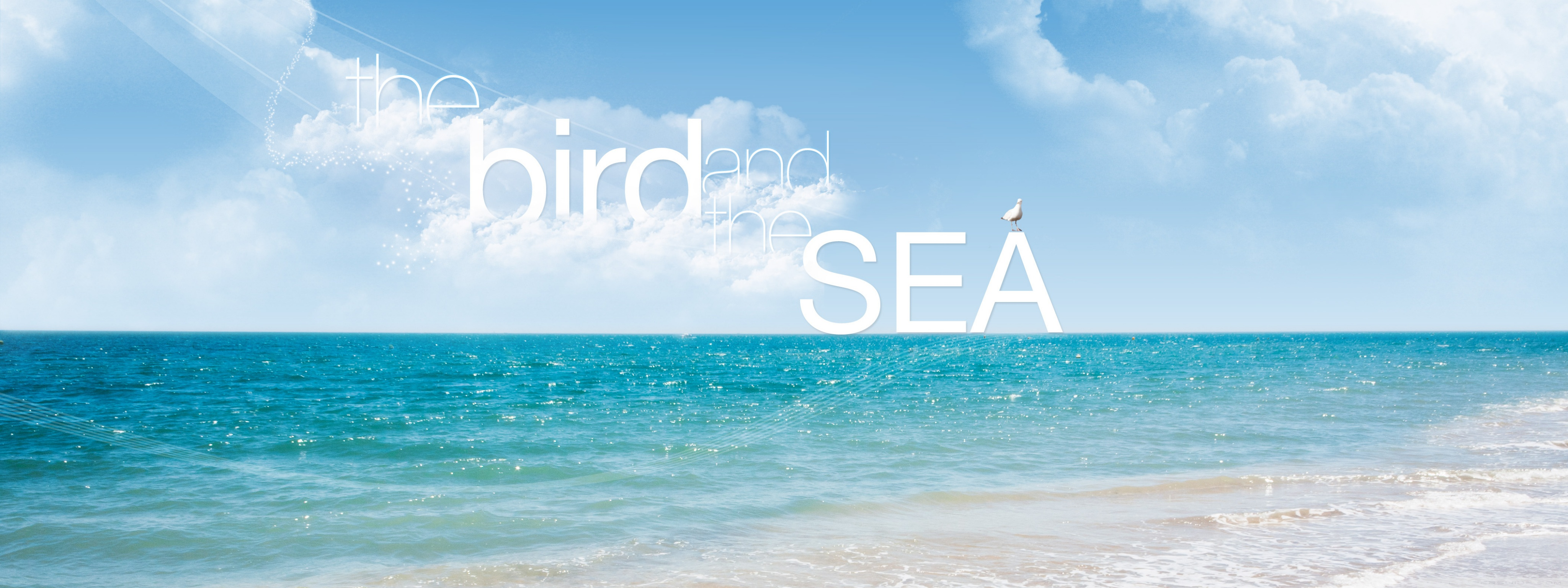 Download Free WallpaperThe Bird And Sea