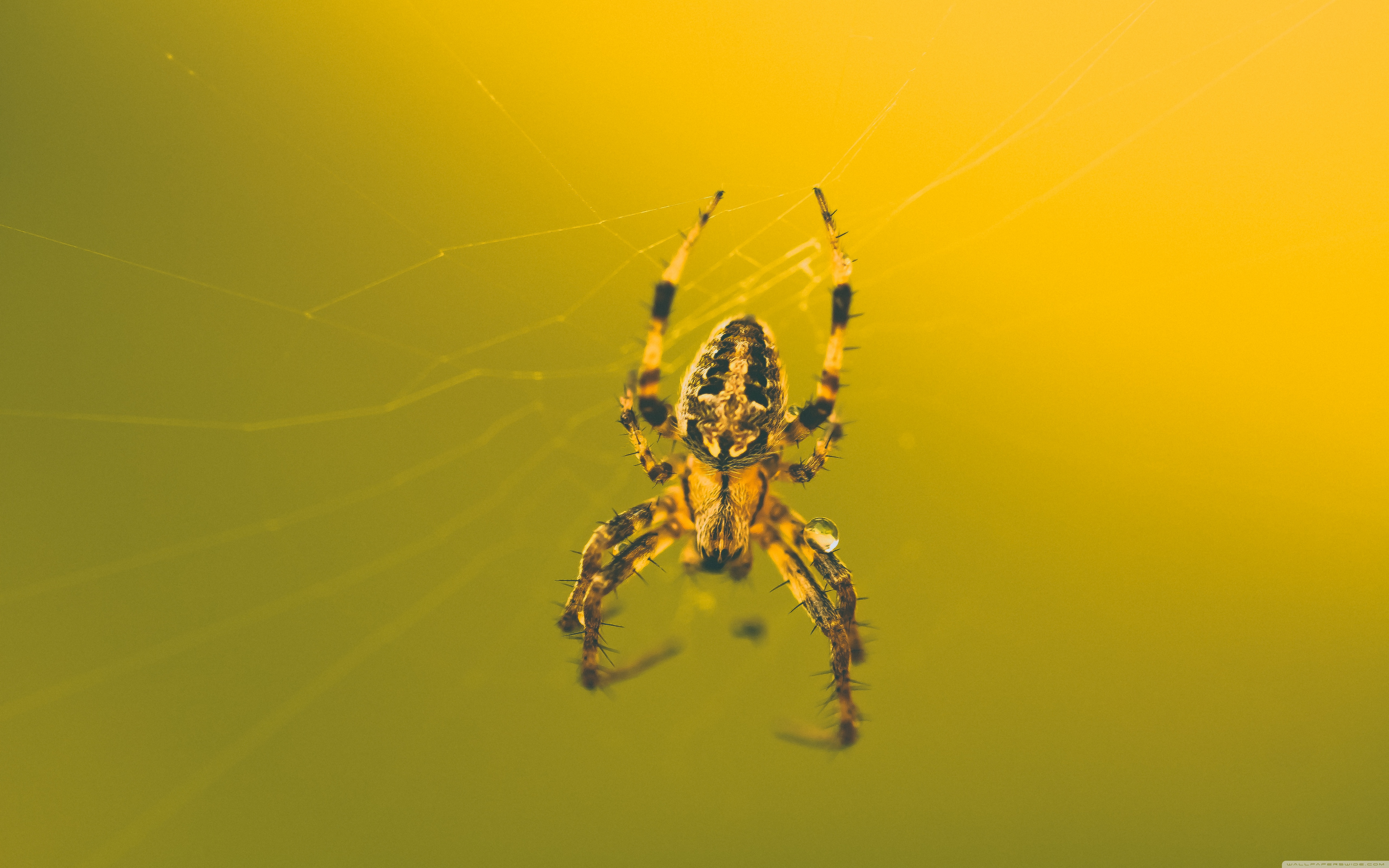 Download Free WallpaperThis Awesome Spider