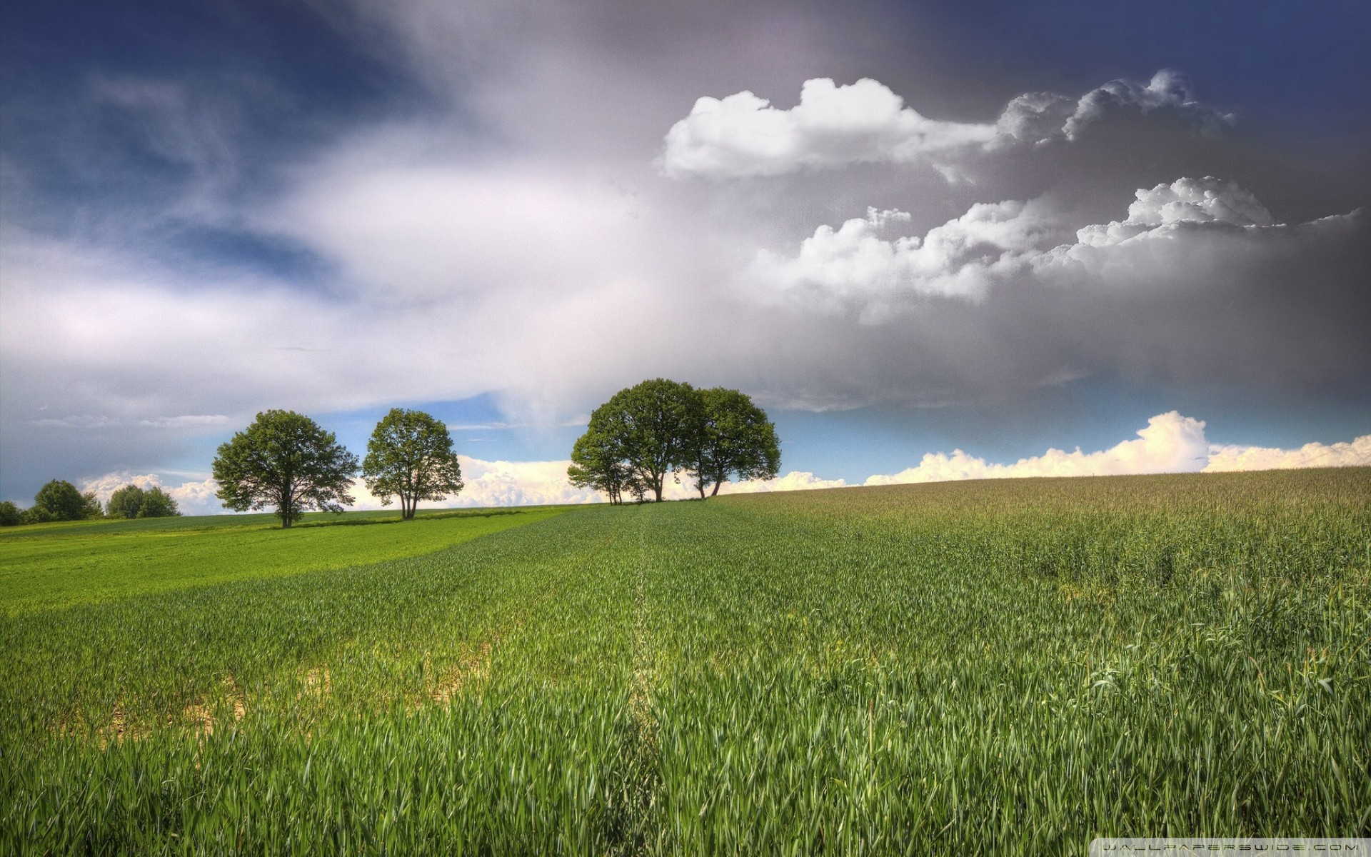 Download Free WallpaperTrees   Fields Clouds